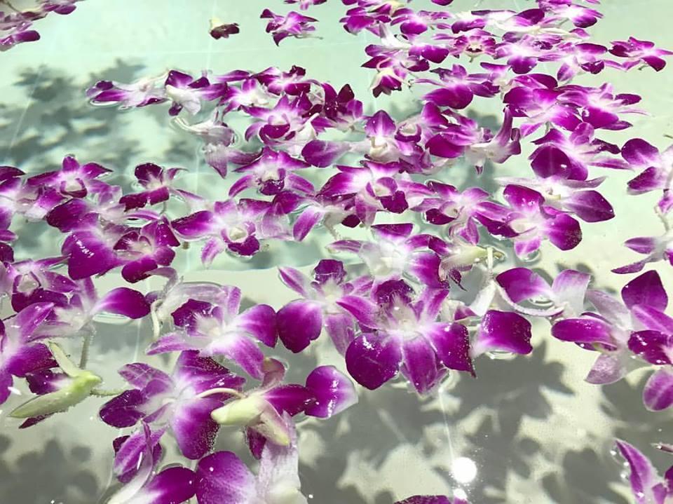 http://www.saito-yu.com/blog/21192462_1540579599357600_1251044353463529622_n.jpg