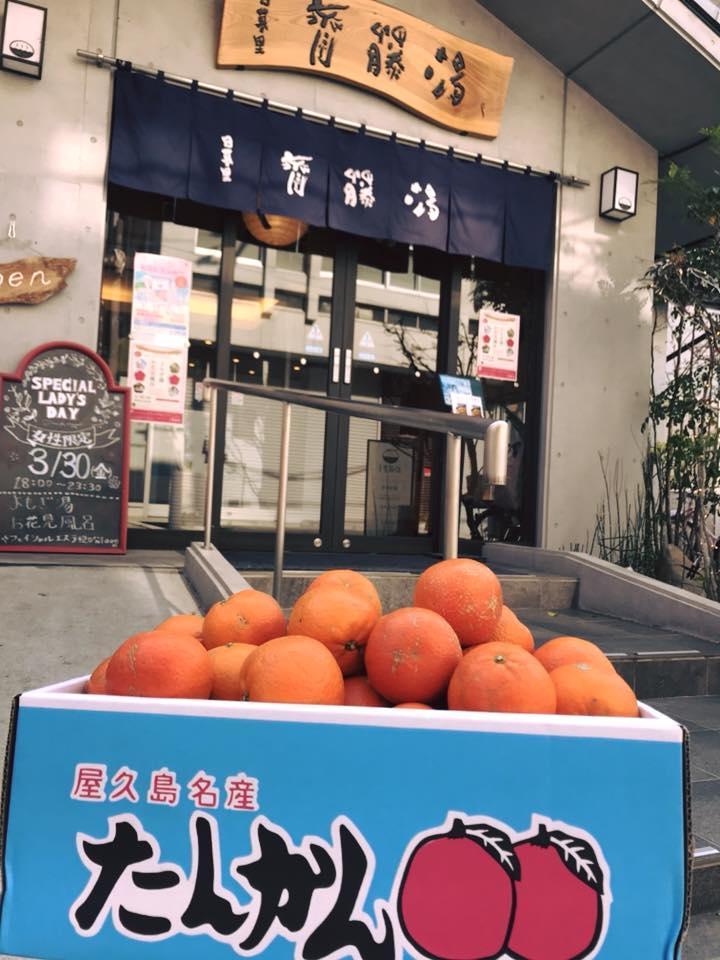 http://www.saito-yu.com/information/29572739_1753813894700835_1275182809841336772_n.jpg